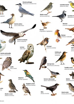 "Tríptico Aves, serie ""Mallorca Natural"" Colònia Sant Jordi – Aves"
