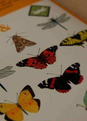 Guia de papallones i libèl.lules del Parc Natural de s'Albufera de Mallorca