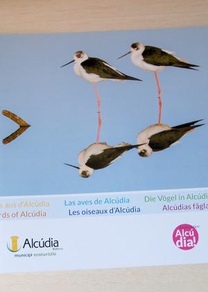 Las aves de Alcúdia – ecosistemas – Ayuntamiento de Alcúdia
